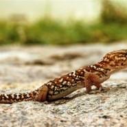 Reptielen
